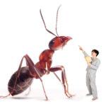Theatervoorstelling Erik of het klein insectenboek