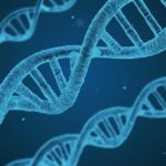 Nieuwe vorm DNA ontdekt – twee keer zo lang als normaal